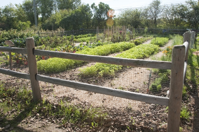 Community Gardens will be allowed to operate to help food banks and those they serve
