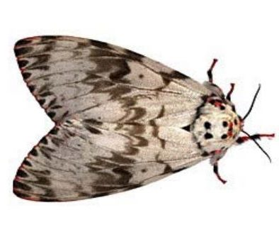 Lanark Council hears update on local Gypsy moth activity